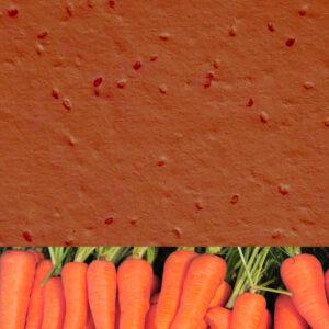 Carrot_burnt_orange