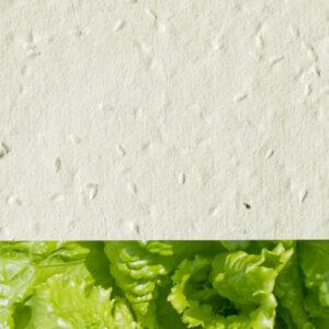 Lettuce_new_cream