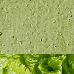 Lettuce_new_green