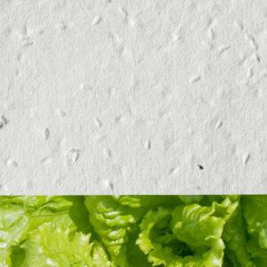 Lettuce_new_white